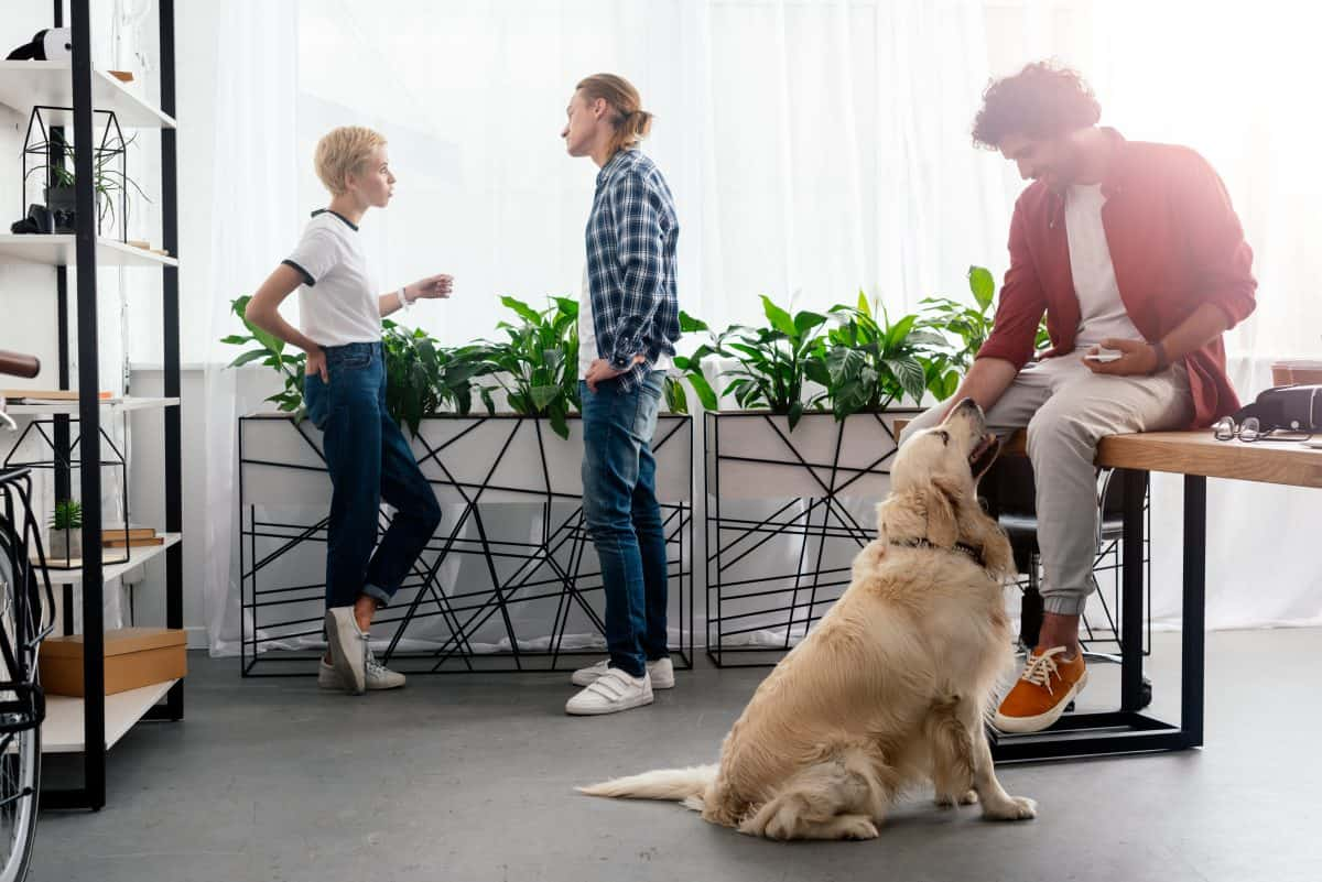 Bijzonder dagen in juni 2021 | Take your dog to work day | inhakers interne communicatie
